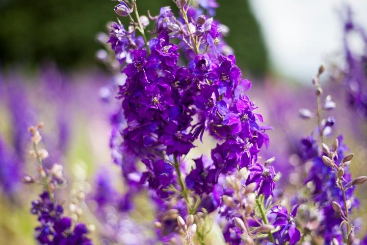 CONFETTI_FLOWER_FEILD_9497