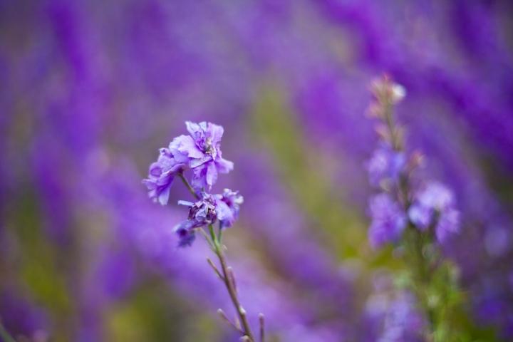 CONFETTI_FLOWER_FEILD_9515