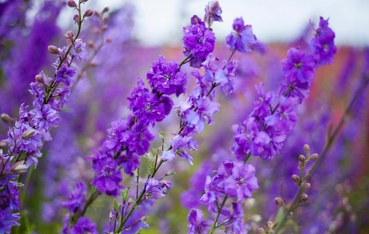 CONFETTI_FLOWER_FEILD_9518