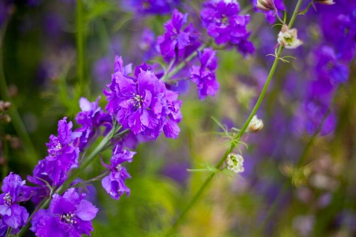 CONFETTI_FLOWER_FEILD_9524