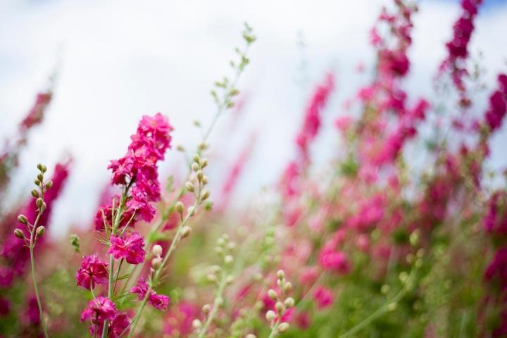 CONFETTI_FLOWER_FEILD_9554