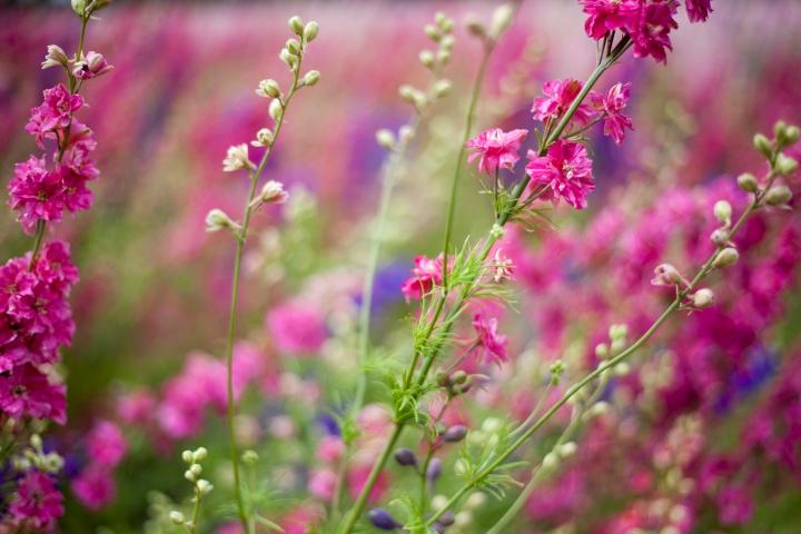 CONFETTI_FLOWER_FEILD_9561