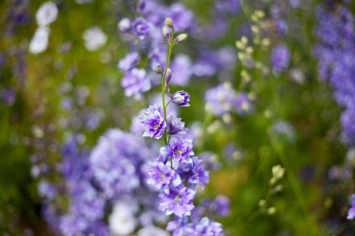 CONFETTI_FLOWER_FEILD_9594